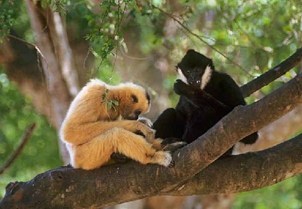 Vườn Quốc Gia Bến En sở hữu rất nhiều loại động vật quý hiếm