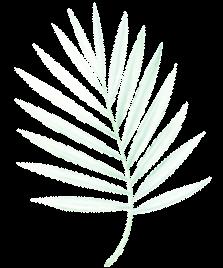 Bông hoa Sun Sầm Sơn